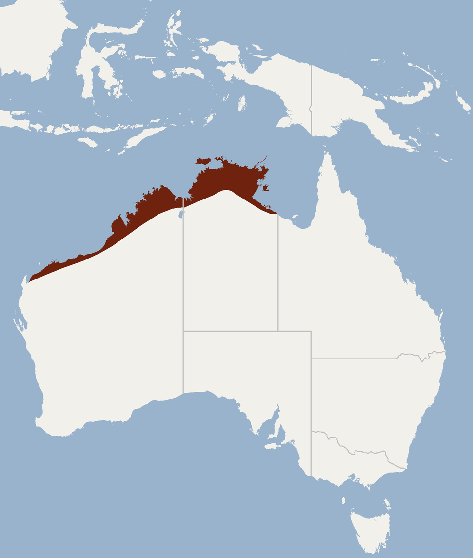 Distribution of Nyctophilus arnhemensis