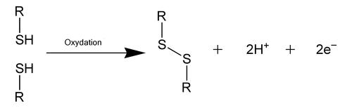 Disulfide bond