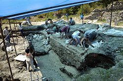 Dmanisi excavation site (2007).jpg