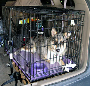 Crate training - A dog in a wire crate strapped into a car for safe traveling.