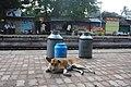DogHridaypur.JPG