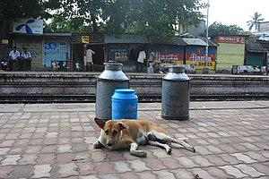 Hridaypur railway station - Image: Dog Hridaypur