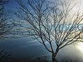 Dojran Lake 132.jpg