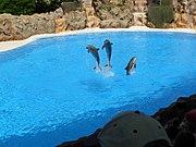 Dolphins at Loro Parque 08.JPG