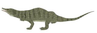 <i>Doswellia</i> genus of reptiles