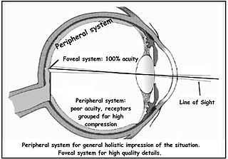 Peripheral vision Area of ones field of vision outside of the point of fixation
