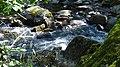 Doubrava mezi Třemošnicí a Ronovem - panoramio (18).jpg