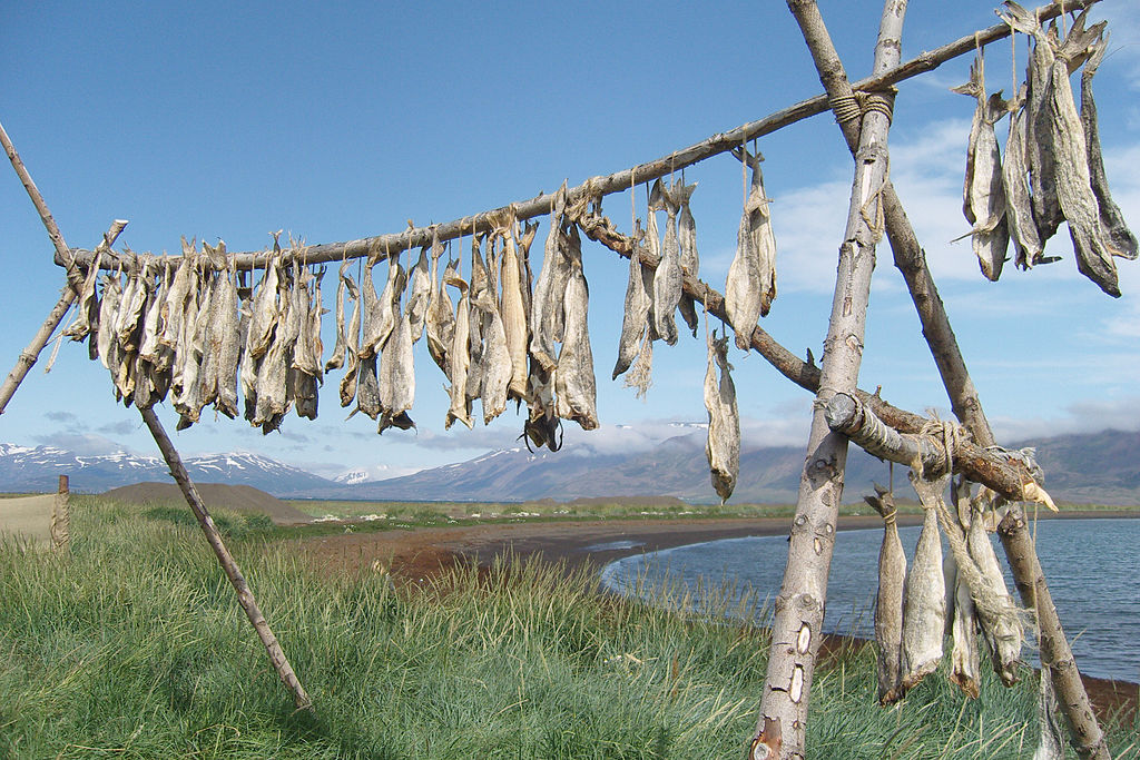 file dryfish iceland jpg wikimedia commons