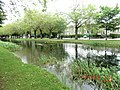Ducks having fun on the Grand Canal in Dublin - panoramio.jpg