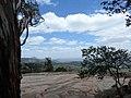 EUCALYPTUS,HORSLEY HILLS,AP - panoramio.jpg