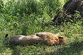Eastern Serengeti 2012 06 01 3396 (7522719030).jpg