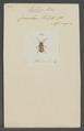 Ecphora - Print - Iconographia Zoologica - Special Collections University of Amsterdam - UBAINV0274 034 28 0049.tif