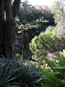 eden garden - Eden Garden