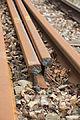 Eisenbahnschienen 2675.JPG
