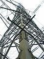 Electricity Pylon - geograph.org.uk - 323154.jpg