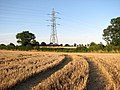 Electricity pylon in stubble field - geograph.org.uk - 1422647.jpg