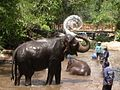 Elephant Bathing cover.JPG