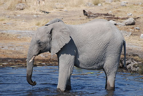 Elephant waterhole.jpg