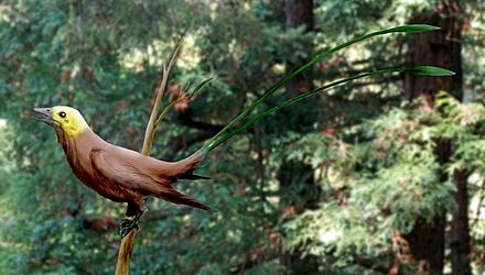 Eoconfuciusornis
