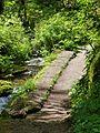 Erosion control 2 - Munson Creek Falls SNS Oregon.jpg
