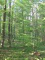 Eschelbronn Naturschutzgebiet Kallenberg 10.JPG