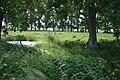 Esquelbecq randonnée des chênes au château (4).JPG