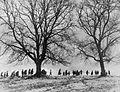 Evacuees' Nature Walk in Devon, 1941 D3064.jpg