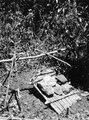 Färdigt giller för fångst av aguti (Dasyprocta). Pearl Islands. Panama - SMVK - 004151.tif