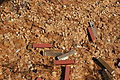 FEMA - 17180 - Photograph by John Fleck taken on 10-04-2005 in Mississippi.jpg