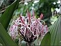 FLOWERS 4 (7355173514).jpg