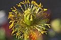 FLOWER (16876112692).jpg