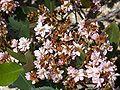 FL Marineland pink flower01.jpg