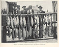 FMIB 42094 Salmon (rod and reel) catch, Del Monte, California.jpeg
