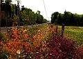 Fall's Vanishing Point (248137482).jpg