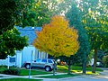 Fall Colors in Madison - panoramio (6).jpg