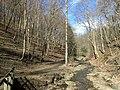 Fall Run Park in Shaler Township, late winter - 13.jpeg