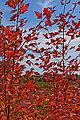 Fall foliage (10076489855).jpg