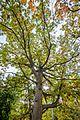 Fall foliage (29781350574).jpg
