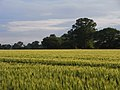 Farmland, Grazeley - geograph.org.uk - 1776064.jpg