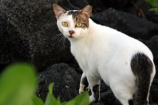 Feral cat Un-owned or un-tamed domestic cat in the outdoors