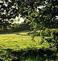 Fields below Llecheigon farm - geograph.org.uk - 1482263.jpg