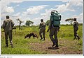Figure 10- Canine Antipoaching Patrol, near Tarangire and Lake Manyara National Parks, Tanzania (29539782563).jpg