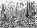 File--C5235-CC5244- Mine Brook, NJ (3361d633-77c7-49fb-955f-0755732d3606).jpg