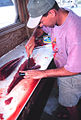 Filleting yellowfin tuna.jpg