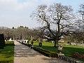 Fine oak, Oldway mansion, Paignton - geograph.org.uk - 696530.jpg