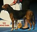 Finnishhound.jpg