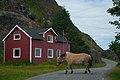 Fjord horse Ure.jpg