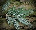 Flickr - Nicholas T - Henry's Woods (6).jpg