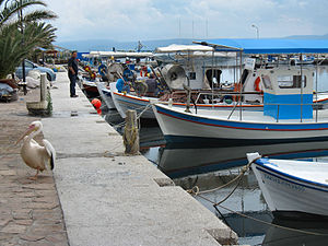 Kalloni - Image: Flickr ronsaunders 47 Working boats in a Lesbos harbour