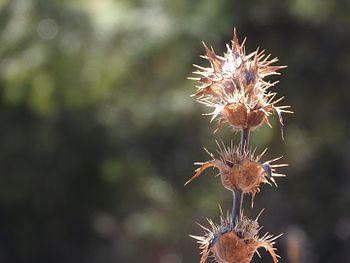Flora at Nanda Devi Mountain Range.jpg